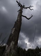 arbres-morts_1
