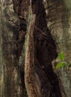 arbres-morts_11