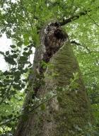 arbres-morts_12