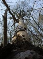 arbres-morts_13