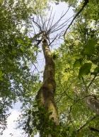 arbres-morts_14
