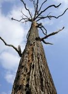 arbres-morts_15