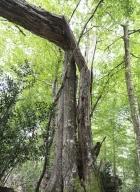 arbres-morts_18