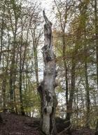 arbres-morts_3
