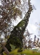 arbres-morts_4