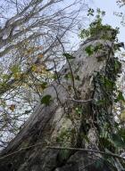 arbres-morts_6