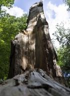 arbres-morts_7