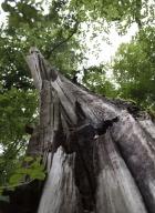 arbres-morts_8