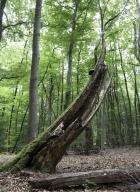 arbres-morts_22