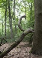 arbres-morts_23