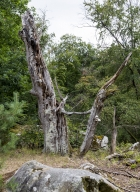 arbres-morts_24