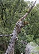 arbres-morts_25