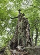 arbres-morts_26