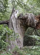 arbres-morts_29