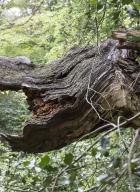 arbres-morts_30