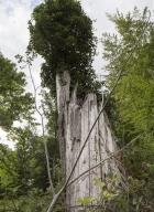 arbres-morts_35