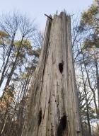 arbres-morts_36