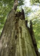 arbres-morts_38