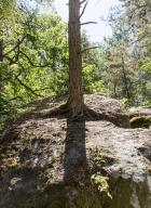 03_arbresrochers-vl