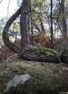 04_arbresrochers-vl