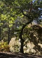 06_arbresrochers-vl