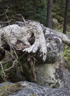 11_arbresrochers-vl