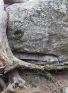 13_arbresrochers-vl