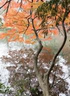 Tokyo-automne__06