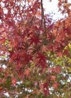 Tokyo-automne__08