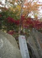 Tokyo-automne__10