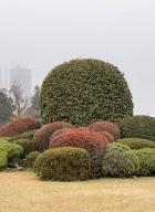 Tokyo-automne__12