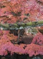 Tokyo-automne__14