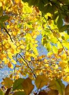 automne-10