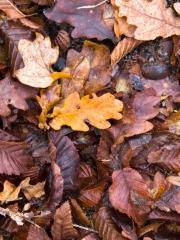 feuilles (1)