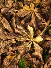 feuilles (10)