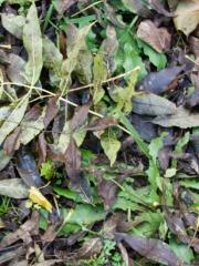 feuilles (11)
