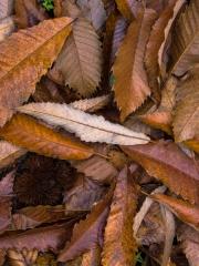 feuilles (12)