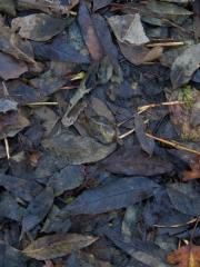 feuilles (13)