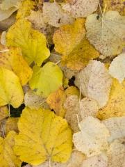 feuilles (2)