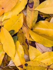 feuilles (3)