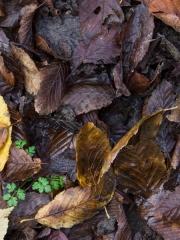 feuilles (4)