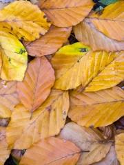 feuilles (6)