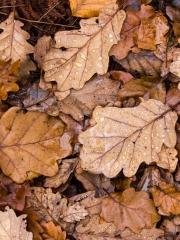 feuilles (8)