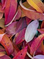 feuilles(14)