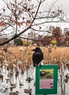 Parc Ueno_Oiseaux_Tokyo 10