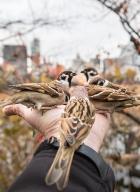 Parc Ueno_Oiseaux_Tokyo 4