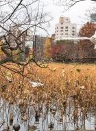 Parc Ueno_Oiseaux_Tokyo 9