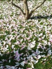 printemps (3)