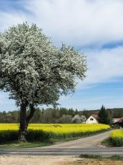 printemps (9)