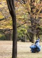 ramasseur de feuilles-3b